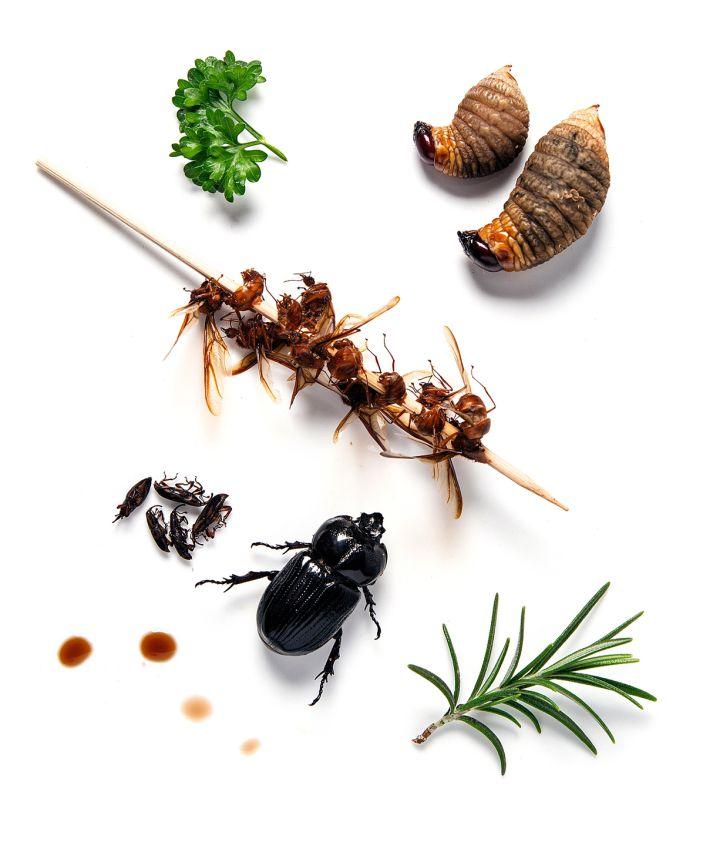Ara as gusanos grillos y otros alimentos bichos exquisitos ignacio medina - Fotos de insectos para imprimir ...